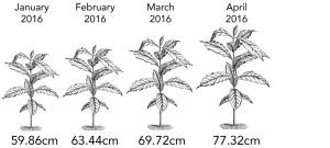 coffee_growth